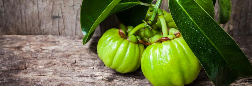 L'effet brûle-graisse de Garcinia Cambogia